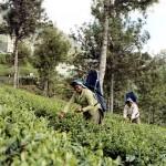 southindia016