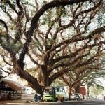 southindia022